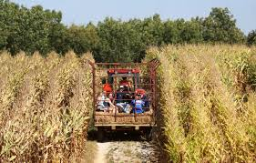 Pumpkin Patch Rice Lake Wi by Dittmar Farm Among Tri State Pumpkin Patches To Pick From