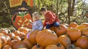 Valas Pumpkin Patch by Vala U0027s Pumpkin Patch