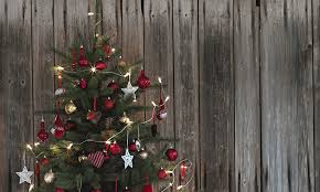 Christmas Tree Species Usa by How To Get An Ikea Christmas Tree For Just 5