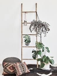 zimmerpflanzen in räumen mit wenig licht westwing