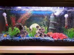 aquarium poisson prix aquarium 54l avec tout le matériel et poissons animaux