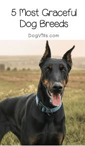 Guard Dogs That Dont Shed by 2848 Best Dog Breeds Images On Pinterest Dog Breeds Pet Care