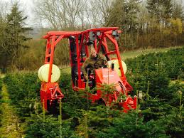 Christmas Tree Saplings For Sale Uk by Wholesale Christmas Trees Hole Park Christmas Trees