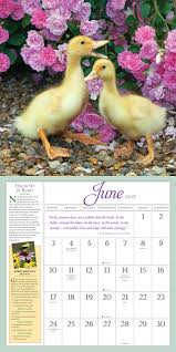 Amazon.com: Audubon Birds In The Garden Wall Calendar 2018 ... Birds And Books At The Barn Sutton Center Owl Tyto Alba Catalogue Of In British Home Full Flight Prey Utah Eb White Quote Early Summer Days Are A Jubilee Time For Birds Linda Benson In Too Expert Advice On Horse Care Riding Swallow Audubon Guide To North American Taxidermy Bird Prey Bird Jo Firthyoung Demo Day
