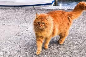orange cat names uncategorized archives find cat names