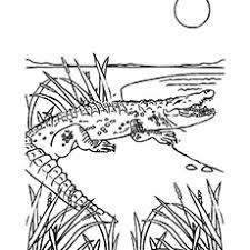 Wild Crocodile Color Page