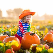 Macdonald Ranch Pumpkin Patch Hours by Pumpkin Patches In Arizona Raising Arizona Kids Magazine