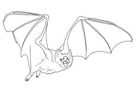 AnimalDownload For Free Bats Coloring Pages With Simple Design Common Vampire Bat Head