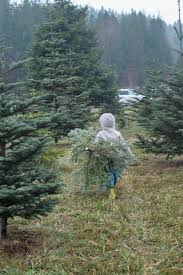 Christmas Tree Seedlings by Organic Christmas Trees In Washington State Natural Baby Mama