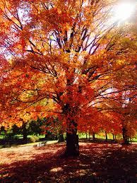 Myers Pumpkin Patch Topeka Ks by Love Fall Love The Trees Kansas City Mo Loose Park Living