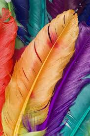 Colorful Feathers IPhone Wallpaper Download