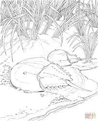 Click The Horseshoe Crab On A Shore Coloring Pages To View Printable Version Or Color It Online Compatible With IPad And Android Tablets