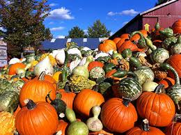 Pumpkin Farms Southern Illinois by Hours And Admission Rates Visit Our Affordable Pumpkin Patch