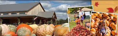 Hamilton Ohio Pumpkin Festival by Fall On The Farm Blooms U0026 Berries Farm Market