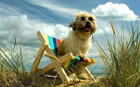 Pampered Pets Bed And Biscuit by Dog Friendly Hotels And Accommodation In Britain Telegraph