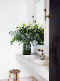 Small Plants For The Bathroom by Best 25 Plants In Bathroom Ideas On Pinterest Bathroom Plants
