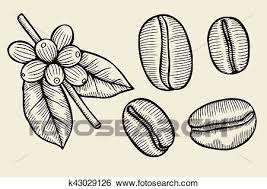 Clip Art Of Coffee Plant Branch With Leaf K43029126