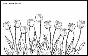 Free Kids Coloring Page Showing Tulip Flowers