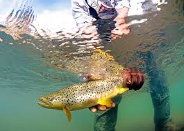 Private Water Fly Fishing Destinations - Colorado - Diy Backyard Fishing Activity 3br House Boating Or From The Naplesflorida Landscaping Vancouver Washington Complete With Large Verpatio Six Mile Lakemccrae Lake July 1017 15 Youtube Pond Outdoor Goods Nick Wondo In Spin More Poi Bed Scanners Patio Heater Flame Tube Its Koi Vs Heron Chicago Police Officer In Epic Can Survive A Minnesota Winter The 25 Trending Ponds Ideas On Pinterest Ponds Category Arizona Game And Fish Flagstaff Stem City