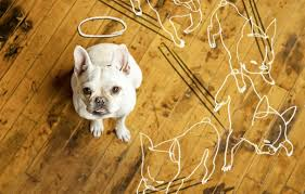 Dog Urine Odor Hardwood Floors by How To Repair Dog Damage To Wood Flooring This Old House