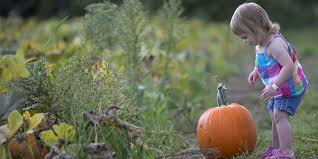 South Reno Pumpkin Patch by 10 Best Pumpkin Patches Around Indianapolis