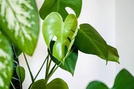 luftfeuchtigkeit durch pflanzen senken zimmerpflanzen tipps