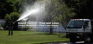 Deer Ticks On Christmas Trees by Alternative Earthcare Long Island Tree U0026 Lawn Service