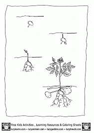 Best Photos Of Growing A Garden Coloring Pages