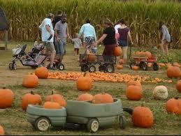 Pumpkin Patch Near Pensacola Fl by Sweet Season Farms Corn Maze And Fall Fun Festivalmilton Local