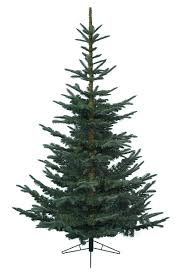 6ft Slim Christmas Tree by 6ft Nobilis Fir Feel Real Artificial Christmas Tree U0027tis The