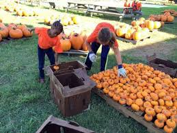Pumpkin Patch College Station 2014 by Sugar Land Church Calls For Crossbow Hunting As Wild Hogs Threaten