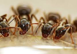 hausmittel gegen ameisen tipps für haus und garten mein