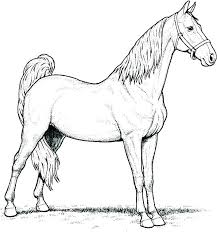 Horses Coloring Pages Spirit Horse And Rain