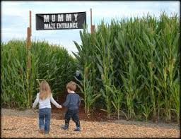 Kent Farms Pumpkin Patch by Find Corn Mazes In Kent Washington Carpinito Brothers In Kent