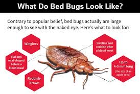 Orkin s Guide to Ousting Bed Bugs Atlantas Frugal Mom