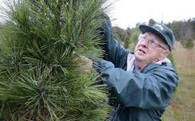 Christmas Tree Farms In Boone Nc by 9 Cut Your Own Christmas Tree Farms A Short Drive From Charlotte