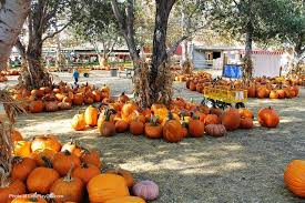 Irvine Pumpkin Patch Tanaka by Top 4 Pumpkin Patches In Orange County Let U0027s Play Oc