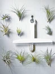 indoor gärten ganz ohne erde pflanzenfreude