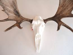 Bull Moose Shedding Antlers by Moose Antler Sheds Air Brushed And Mounted On 24