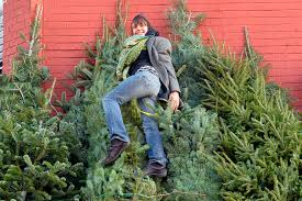 Fresh Christmas Trees Types by Christmas Trees Are Now Going For 1k In Nyc New York Post