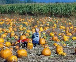 South San Jose Pumpkin Patch by Best 25 Local Pumpkin Patch Ideas On Pinterest Pumpkin Field