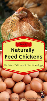 114 Best Things For My Chickens Images On Pinterest | Backyard ... Why Should You Compost Chicken Manure Is Naturally High In 1105 Best Backyard Project Images On Pinterest Raising Baby Chick Playground Coops Pet Chickens And Worming Backyard Controversial Here Are Tips How To Naturally Treat Coccidiosis Your Chickens Natural Treatment Of Vent Prolapse Ducks 61 To Me Raising Means Addressing Healthkeeping Deworming Homesteads