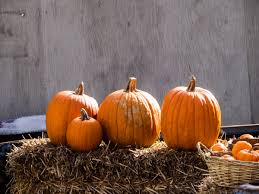 Top Pumpkin Farms Wisconsin by 24 Pumpkin Patches Near Washington D C Mapped