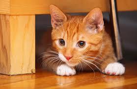 70 cat names hilarious names you ll