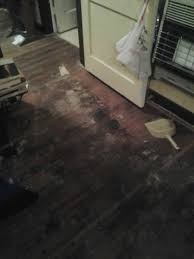 Can You Steam Clean Unsealed Hardwood Floors by Removing Pet Urine Stains From Hardwood Floors Thriftyfun