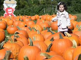 Pumpkin Picking In Ct by The Day Pumpkin Picking News From Southeastern Connecticut