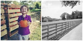 Pumpkin Patch Nashville Area by Nashville Area Pumpkin Patches The Nashville Mom