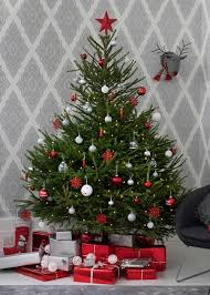 Which Christmas Tree Smells The Best Uk by Real Christmas Trees U2013 How To Buy Decorate And Care For Your Fir