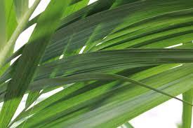 20 zimmerpflanzen die wenig licht brauchen gartenlexikon de