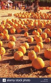 Murray Farms Bakersfield Pumpkin Patch by South Barrington Illinois Real Estate And South Barrington